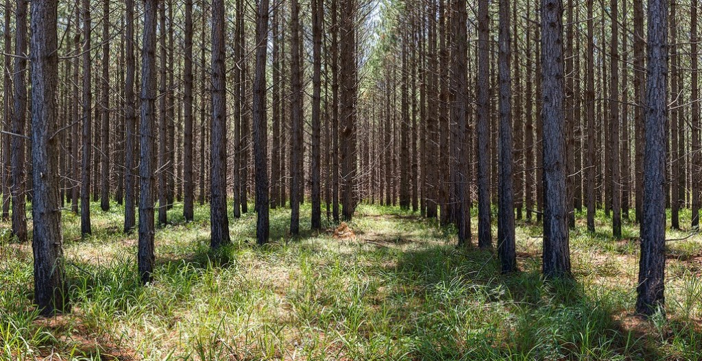 Le bois énergie dans les réseaux de chaleur