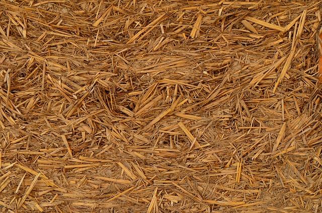 Le b.a.-ba de la biomasse