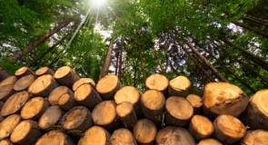 Centrale biomasse de Gardanne : Uniper fait appel à l'interdiction d'exploiter
